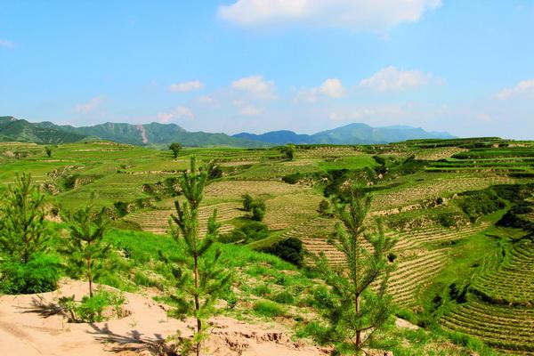 生态扶贫的山西实践:购买式造林