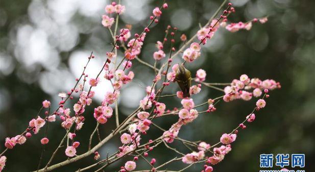 """花开""""春天里"""""""