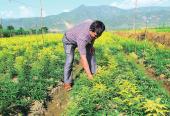 农业部:培育新型职业农民 2018年做这四件事