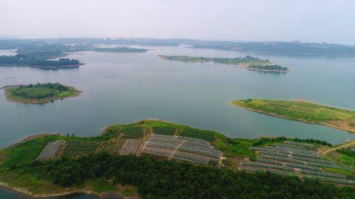 京河村葡萄基地
