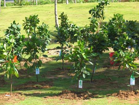 临沂价监局积极参加义务植树造林活动