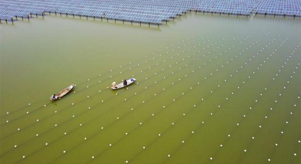 江苏泗洪:综合养殖效益高