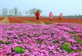 北京将创百余个农业好品牌