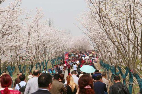 天王樱花园