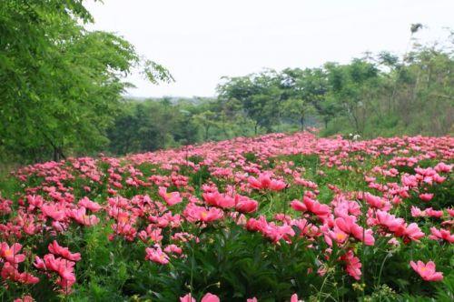 """""""六园经济""""兴句容"""