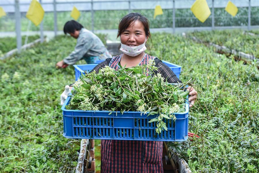 浙江慈溪:盐碱地上走出一条科技生态的现代农业发展之路