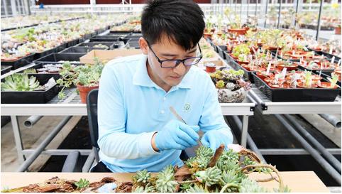 多肉名贵品种拍卖价数十万元 他将数千种植物引进上海