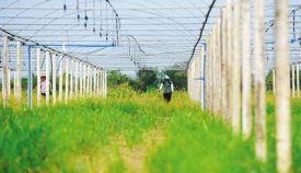 财政部:全国已整合各级财政涉农资金3286亿元
