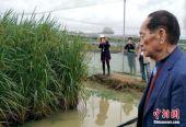 袁隆平:将在六省试种耐盐碱杂交水稻 2020年大面积推广