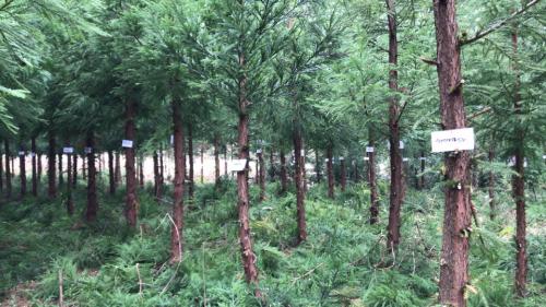 整片树林编号完毕贵州省发改委供图