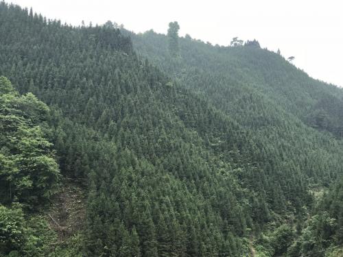 贵州有丰富的森林资源贵州省发改委供图