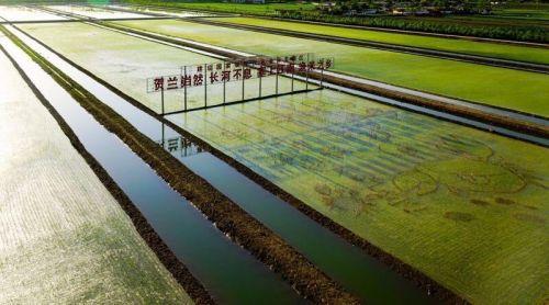宁夏有机水稻种植基地