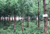 贵州启动实施单株碳汇精准扶贫