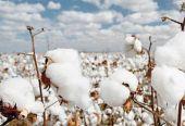 发改委发放80万吨棉花关税配额外优惠进口配额