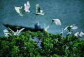全面加强生态环境保护 坚决打好污染防治攻坚战