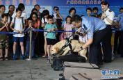 广州海关举办缉毒犬开放日活动