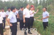 河北广平党员干部党建林庆祝建党97周年