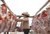 儋州农业:在山呼海应与地绿人和中转型升级