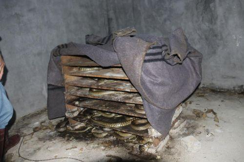 符家所养殖的长标蛇