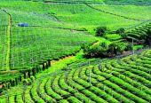农村新产业快速发展 上半年乡村旅游营收增长15%