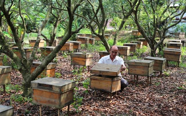 """广西灵山:林下养蜂让农民脱贫致富有""""蜜""""诀"""