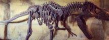 2亿年前曾有恐龙在贵州茅台镇游泳