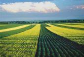 """抓好""""粮头食尾""""和""""农头工尾"""" 加快建设粮食产业强国"""