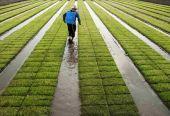 刘丽伟:农业供给侧结构性改革重在增强能力