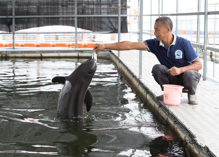 人工繁殖江豚---见证长江生态保护变迁
