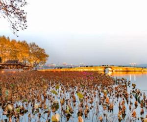 杭州旅游旺季交通攻略来啦!西湖景区怎么玩看这里