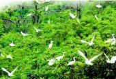 中国应与其他国家分享环境治理经验