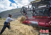"""首届""""中国农民丰收节"""" 西藏展高原特色丰收"""