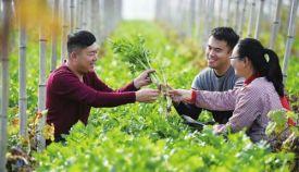 光伏扶贫:中国智慧惠及扶贫事业