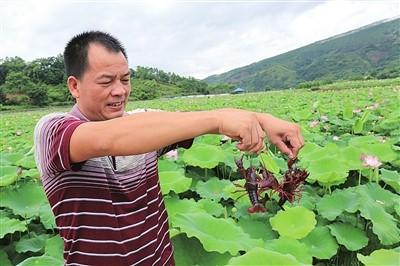 山东鱼台龙虾产业 乡村振兴的发动机