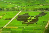 叶兴庆:创新乡村振兴投入机制