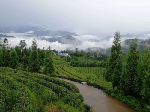 2、四川省乐山市马边县现代茶业产业化建设