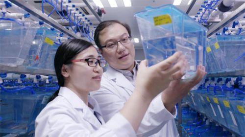 造血干细胞归巢记