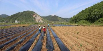 彝良农业农村经济平稳增长