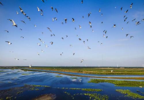 崇明东滩观鸟季已到 来一场说走就走的湿地之行