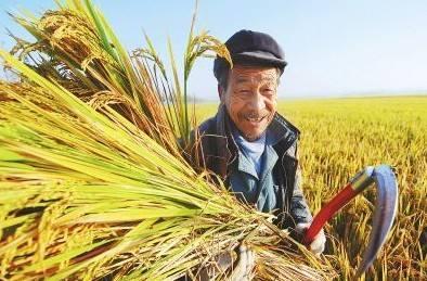 确保长江经济带农业农村面源污染治理 到2020年取得明显成效
