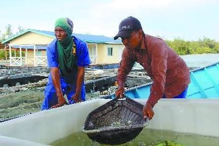 中企助文莱打造渔业研发中心