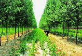 商洛发展林下经济成效显著