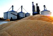 中国将全面强化粮食和战略储备监管