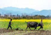 四部门:做好春耕化肥生产供应和价格稳定工作