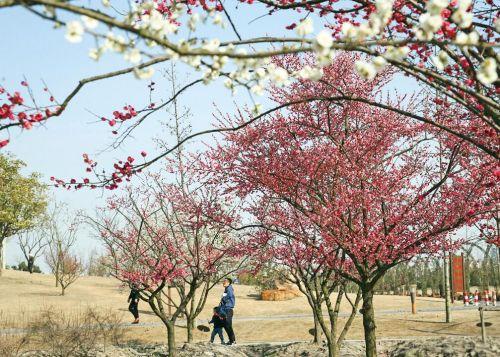 上海已入春 赏花正当时