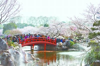 """一天迎客超30万,连续5年赏樱热度全国第一 大数据亮出武汉""""樱花第一城"""""""