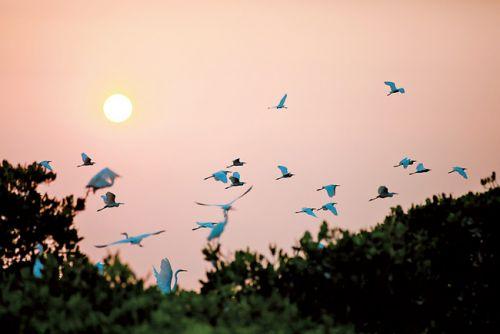 夕阳下的白鹭轻灵起飞。