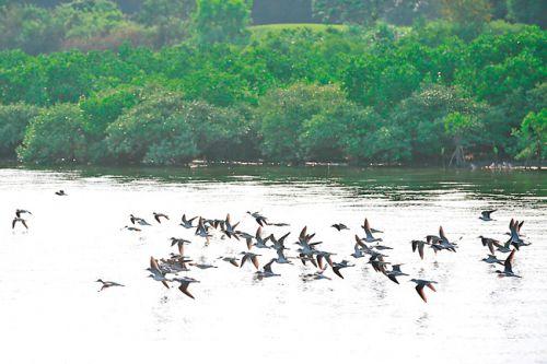 群鸟在海湾掠水而飞。