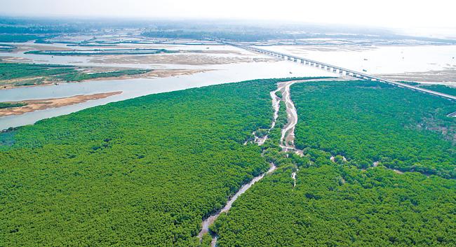 大美儋州湾湿地 红树林尽显风姿