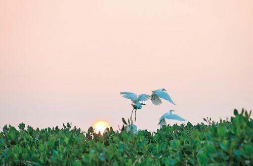 三五白鹭翩翩起舞。